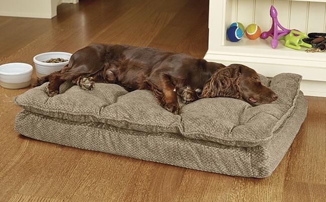 Šuns guolis 053