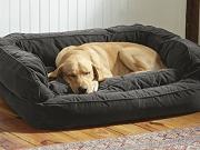 Šuns guolis 045